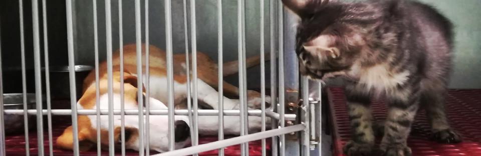 cane-e-gatto-ambulatorio-veterinario-delle-olimpiadi.jpg